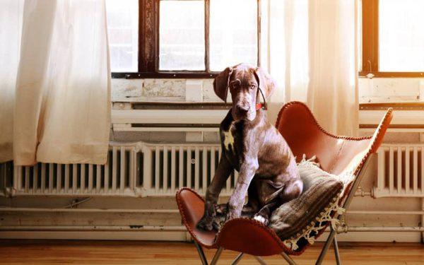 ¿Es cierto que dependiendo de los tipos de radiadores se obtiene más o menos confort?